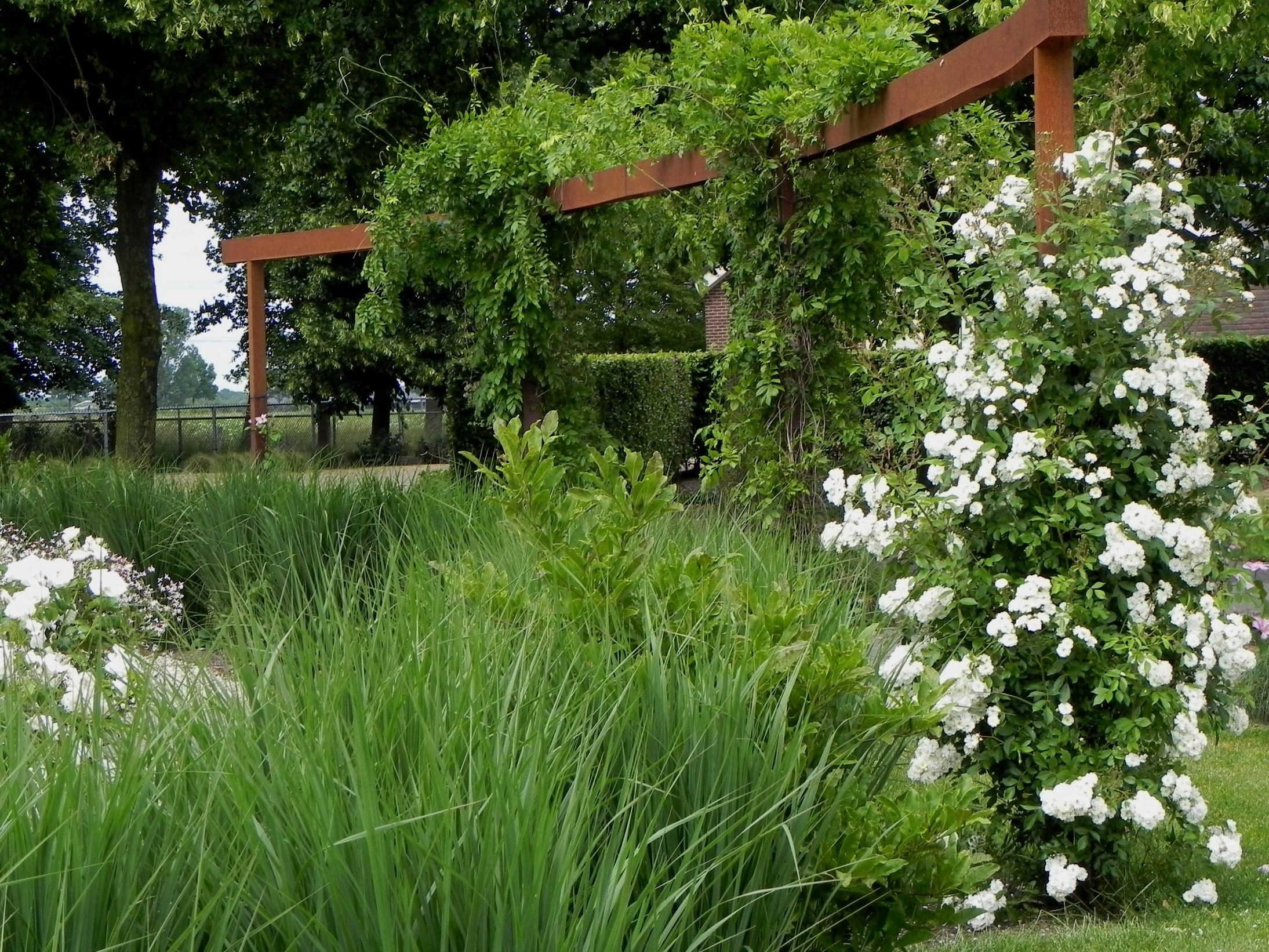 gebogen cortenstaal pergola begroeid met klimplanten