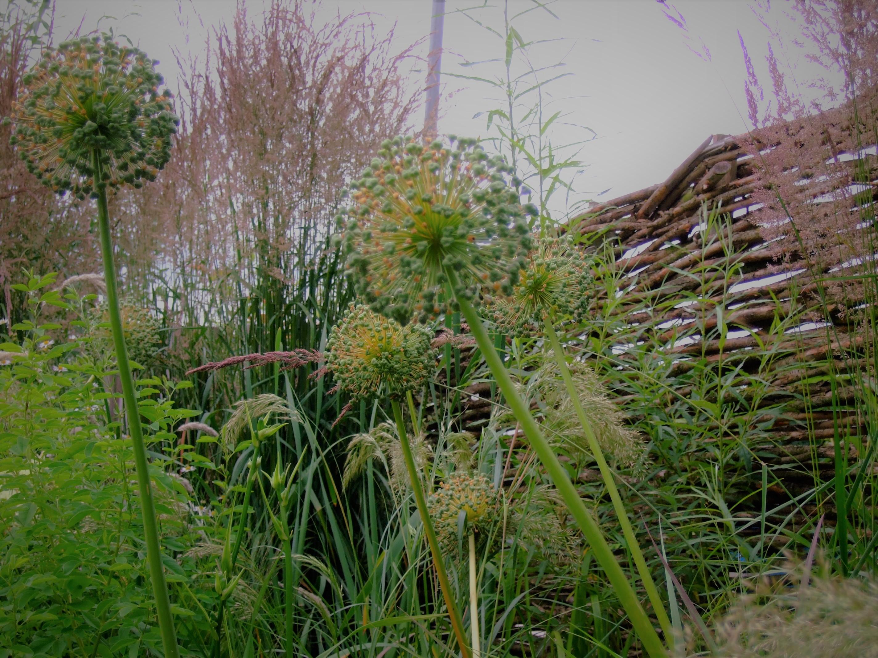 wilgentenen schutting en beplanting van grassen en uitgebloeide sieruien