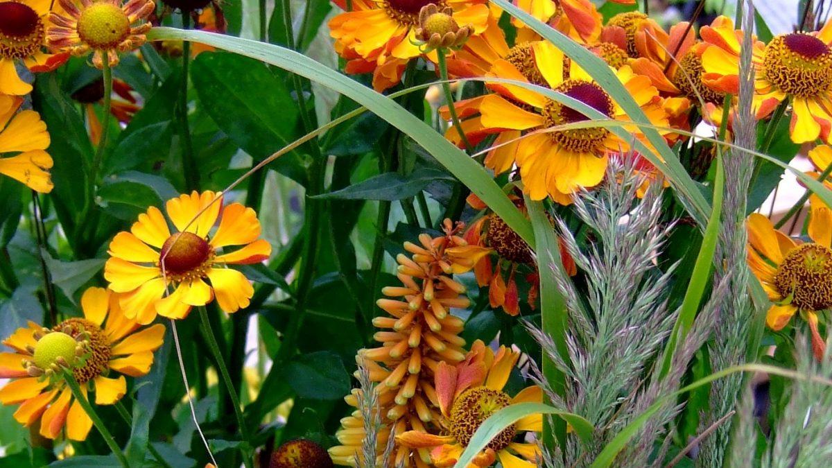 fgeel ornaje bcombinatie van vaste planten