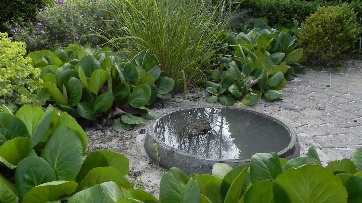 Foto uit de publicatie 'het beeld achter de tuin' in het kwartaal magazine van de Vereniging van Vlaamse vaste Planten'