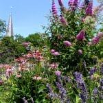 zomerborder met roze vlinderstruik (Buddleja), Lavendel en zonnehoed (Echinacaea). Op de achtergrond de kerktoren van Velp.