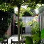 Zittend onder de dakmoerbei met zicht richting tuinpoort. Een lichtgrijze schutting en roze rozen op stam.