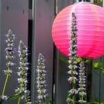feest in deze kleine fijne tuin met de felroze papieren lampion