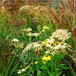 Gemengde natuurlijke borderbeplanting (prairiebeplanting) in oktober. Laatbloeiende planten en verkleurende grassen zijn als een bloemenwei door elkaar geplant.