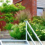 een verzinkt stalen trap overbrugt het hoogteverschil in de tuin. De Cornus controversa zorgt voor schaduw op de lange houten bank. Planten en grassen bloeien