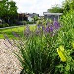 Beeld van het midden van de tuin met gazon, een schuur borders en een meerstammige Liquidambar.