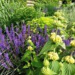 Beplantingscombinatie in geel en paarsblauw