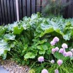 het middendeel van de pijpenla tuin is een snoeptuin met aardbeien, rabarber, bessen en kruiden.
