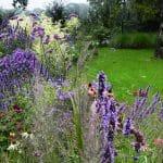 Een prairieborder is een natuurlijk ogende border. De planten in deze border bloeien in paars, roze en crème.