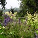 weelderige prairieborder in paarsblauwe en roomkleurige tinten