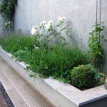 Verhoogde plantenbak met witte rozen en lavendel tegen een lichtgrijs gestuukte muur
