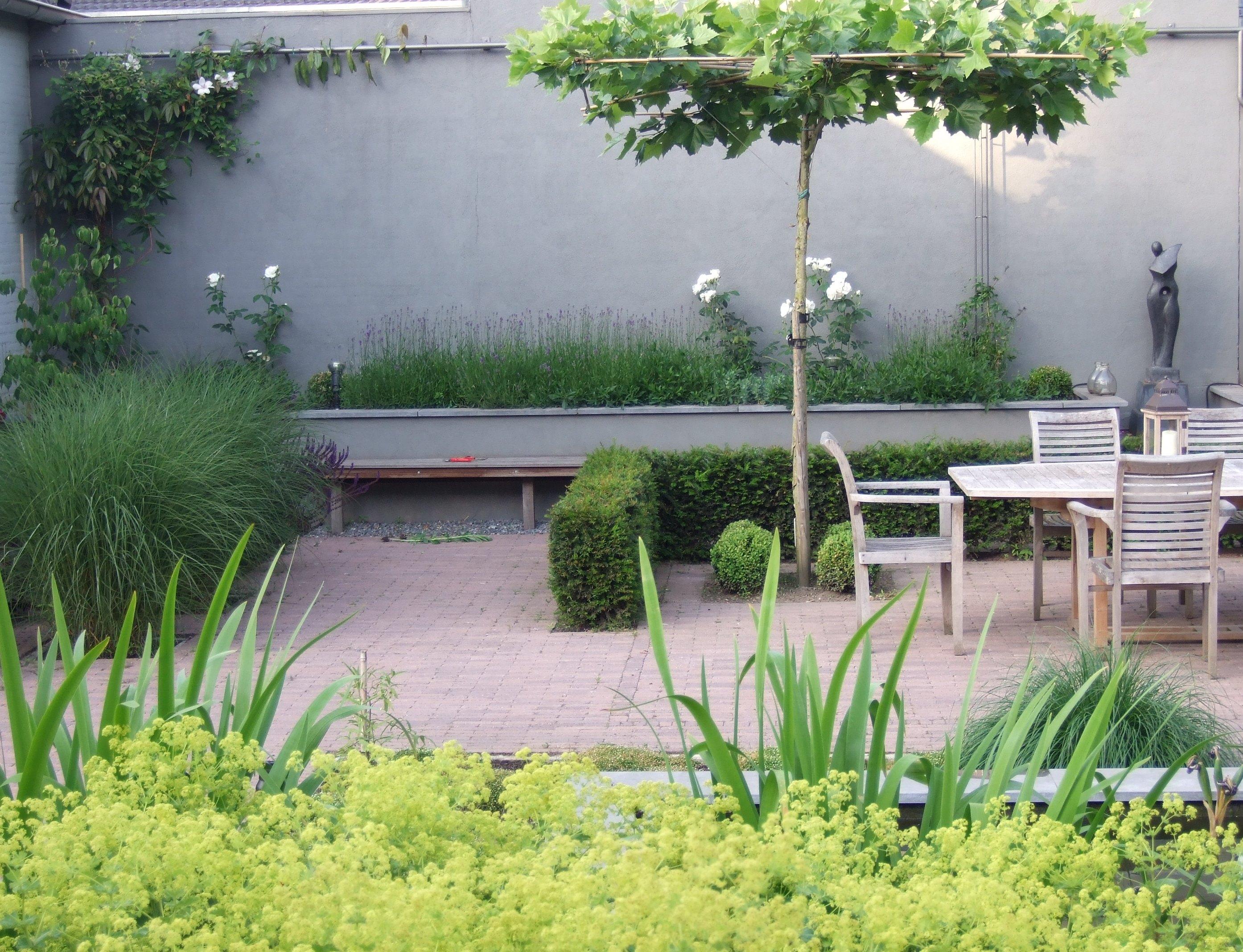 terras onder een dakplataan is omgeven door een lage Taxushaag.