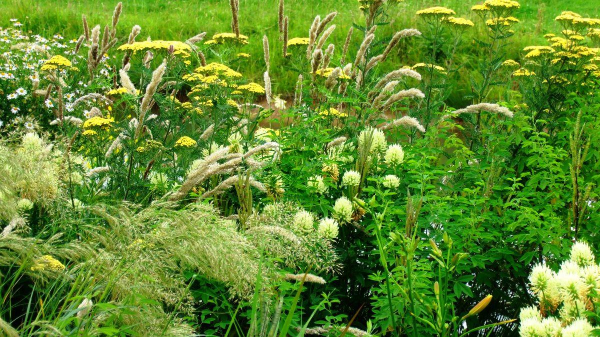 foto uit artikel prariebeplanting in Bloem en Plant tuinontwerp special voorjaar 2013