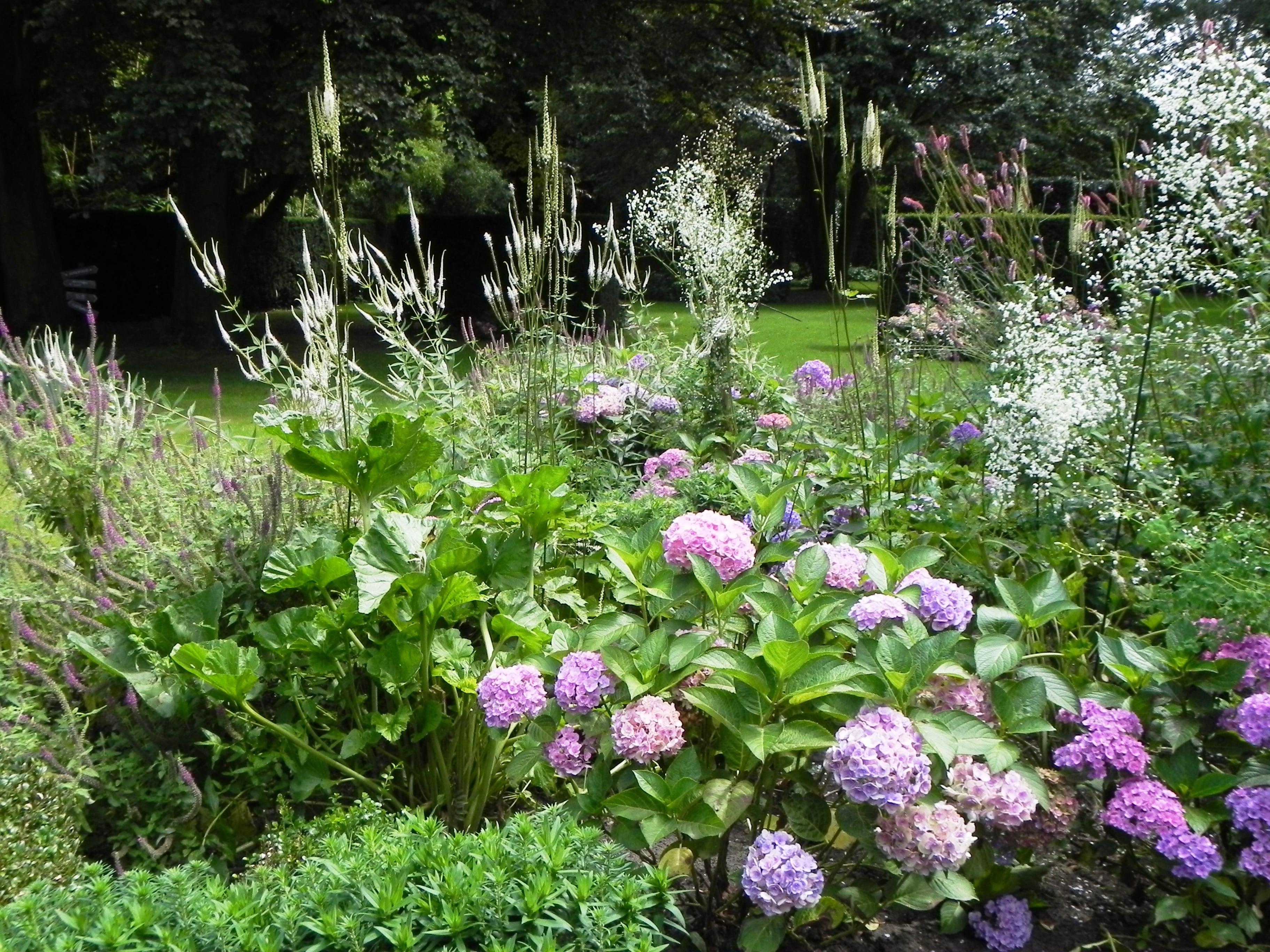 Rijkgevulde borders met Hortensia's met romantische namen zoals 'You and Me forever' en opgaande ijle vormen van Veronicastrums en Actaea's gecombineerd met de pluimvormige witte Thalictrum delavayi 'Splendide White'