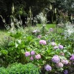Roze Hortensia's, witte Veronicastrum en witte Thalictrum geven een sprookjesachtig beeld