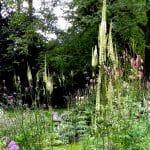 De vele ijle oprijzende planten geven een heel luchtige indruk