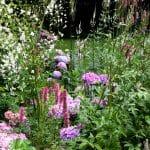 weelderig beplante border in roze en witte kleuren