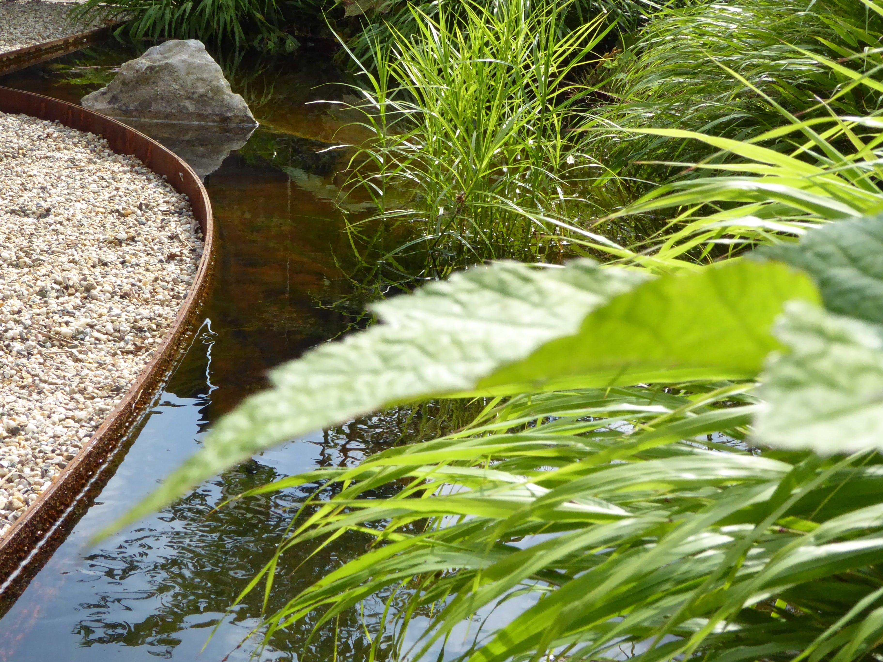 vjver met gebogen cortenstaal rand en bij water passende beplanting