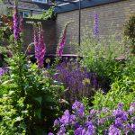 Kleurrijke zomerborder in paarsblauw, lila en roze tegen de achtergrond van een strakke hoekbank.
