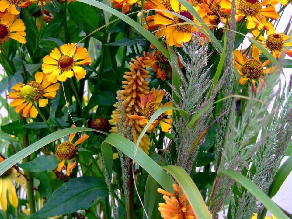 oranje bloeiende plantcombinatie voor een border