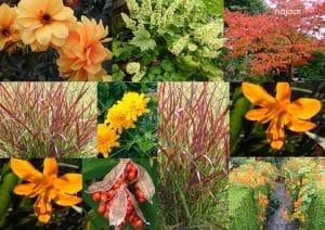 compositie van bloemen die oranje bloeien in het najaar