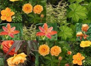 compositie van oranje bloemen die bloeien in de zomer