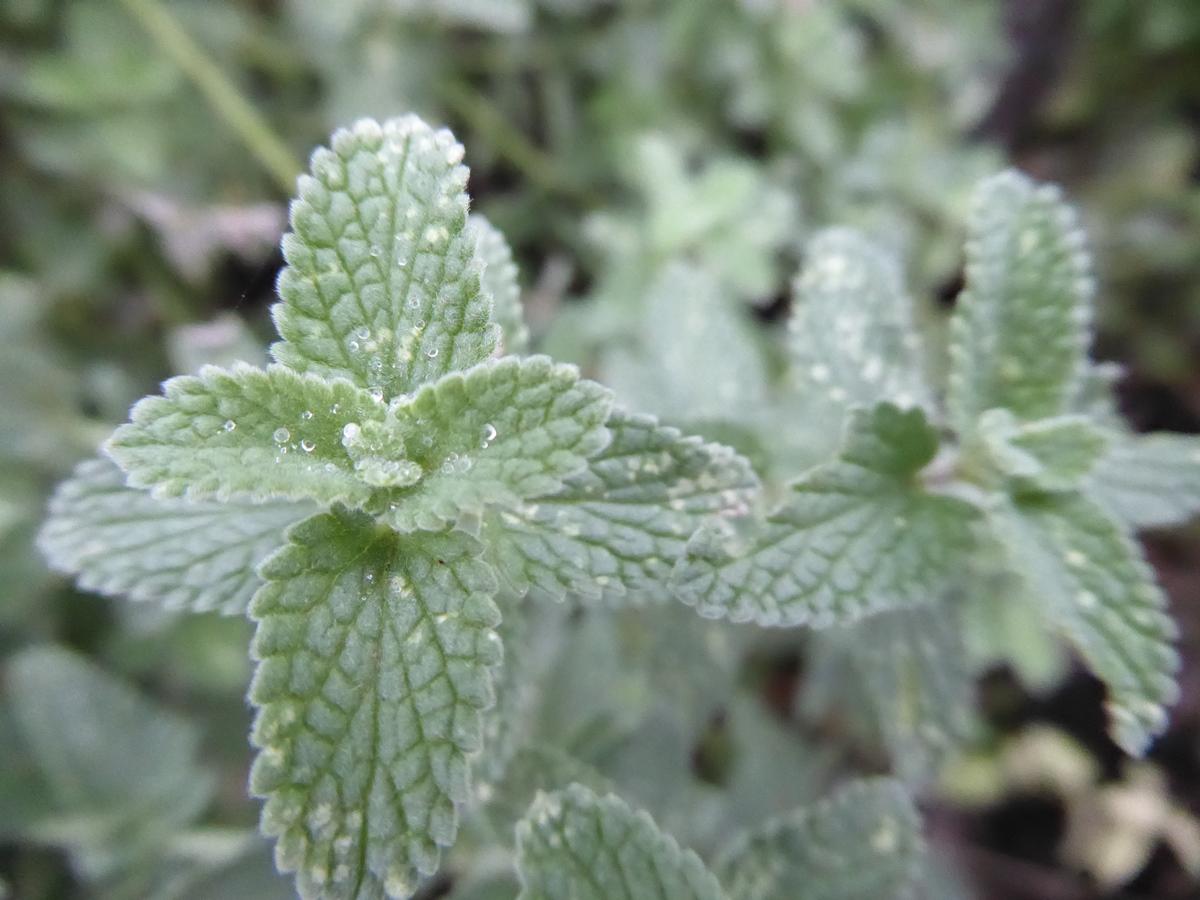 Onwijs 6 tips voor beplanting in droge situaties | Oxalis tuinontwerp XD-28